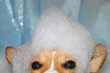 Cagnetto bagno