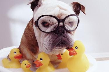 bagno al cane