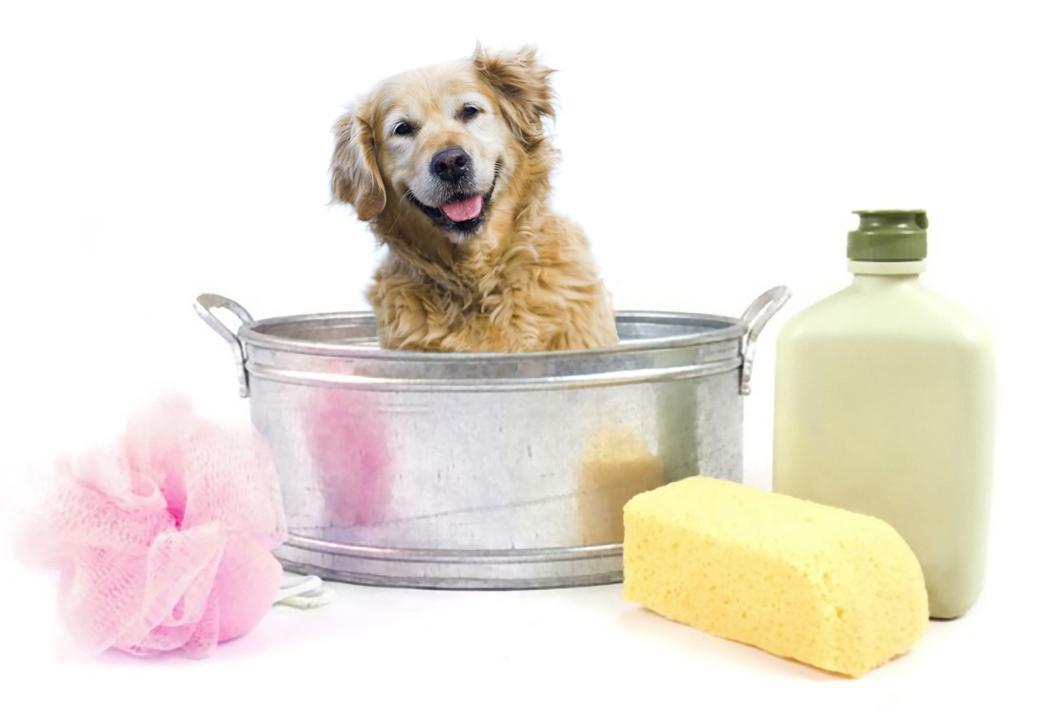 Lavaggio cani automatico